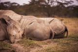 Rhinoceroses in Nakuru National Park