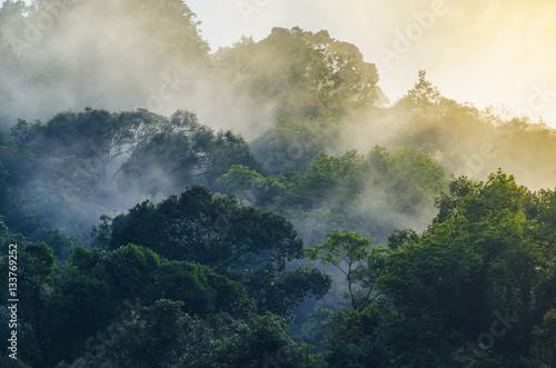 Nature view of Khao Yai National Park, Thailand - 133769252