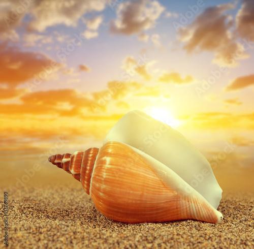 Plakat Tropical sea shell on sandy beach at sunset.