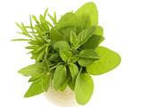 fresh herbs on a white background
