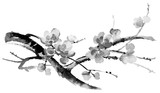 Ink illustration of blooming branches of cherry tree. Sumi-e, u-sin, gohua painting style. Silhouette made up of brush strokes isolated on white background. - 133804405