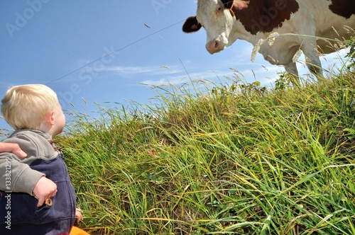 Poster Un jeune enfant regarde une belle vache dans un pré