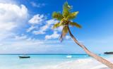 Fototapety Coconut palm grows on white sandy beach