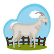 goat animal farm in the field vector illustration design