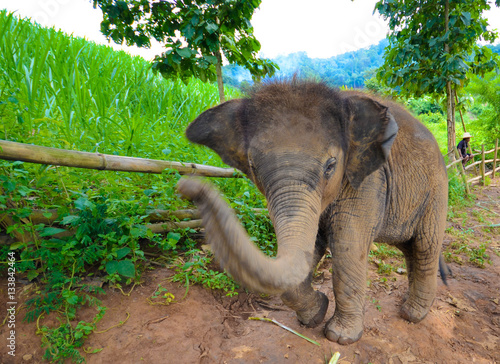 Poster Kleiner Babyelefant möchte Spielen, Thailand
