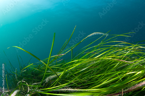 Colorful coldwater reef with green algae