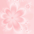 Abstract delicate pink flowers