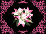 bunch of lily flowers in pink design on black