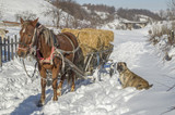 Horse cart with bales of hay in winter