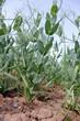 Leinwanddruck Bild - Landwirtschaft