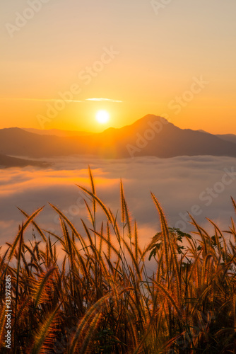 Poster beautiful sunrise with mist in the morning at Phutok