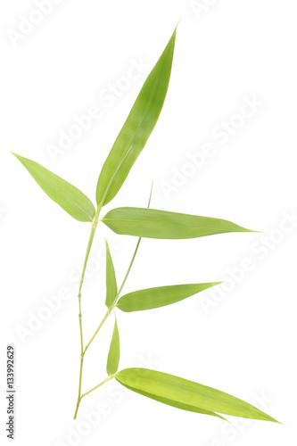 Fotobehang Bamboe Bamboo leaves