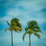 Palm Trees Against Tropical Sky With Airplane Plane in Backgroun - 134022894