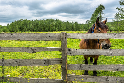 Poster Farm with horse on green field, rural scene