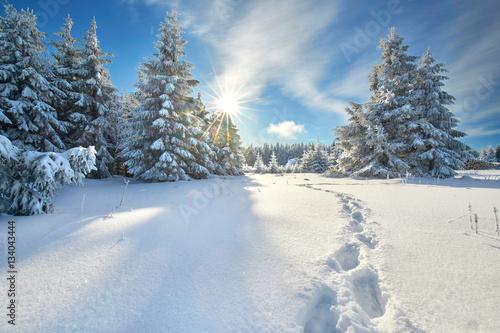 Tuinposter Weg in bos Fußspuren im Tiefschnee, Spaziergang