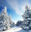 Magie im Winterwald - bestes Winterwetter
