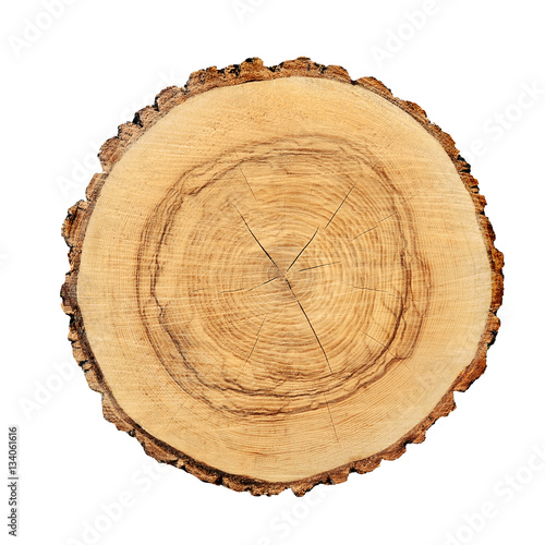 Tree rings and texture on a large wood stump isolated on white