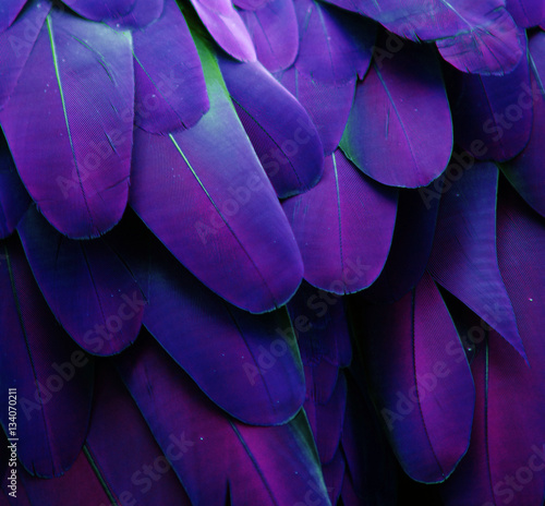 Macro photograph of the blue and purple feathers of a macaw. - 134070211