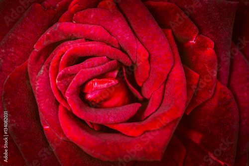 Staande foto Roses background nature Flower Valentine Red rose