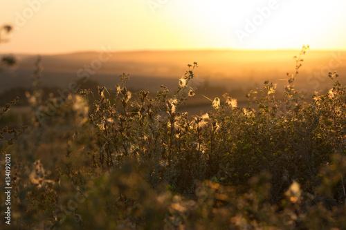 Fotobehang Jacht autumnal meadow close up