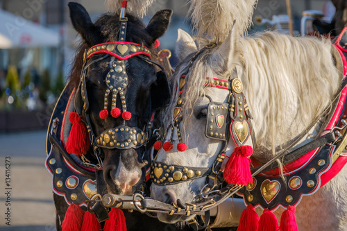 Poster Team of two decorated horses for riding tourists in a carriage