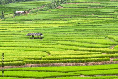 GreenTerraced rice fields in northern Thailand