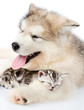 Puppy embracing sleeping kitten. isolated on white background