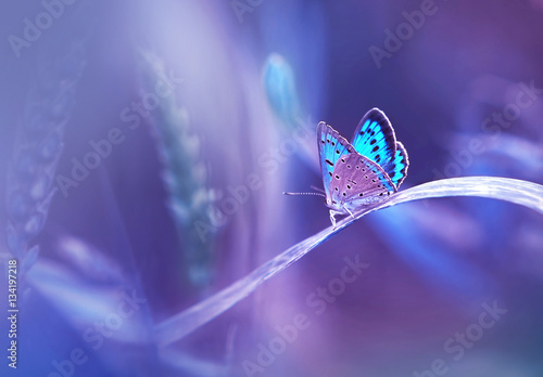 Fototapety, obrazy : Beautiful blue butterfly on blade of grass in nature with a soft focus on blurred purple background beautiful bokeh. Magic dreamy artistic image for wallpaper template background design card.
