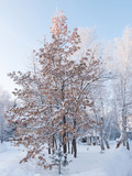 Trees covered with snow in sanatorium