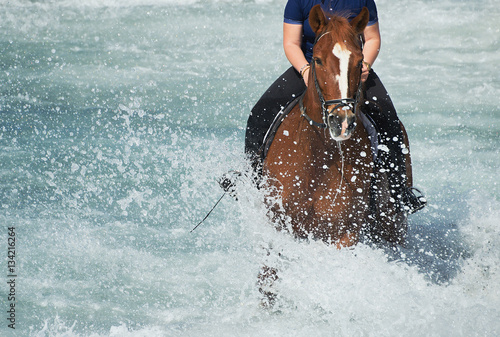 Poster Brown horse running in the ocean with a rider