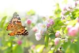 Schmetterling 224