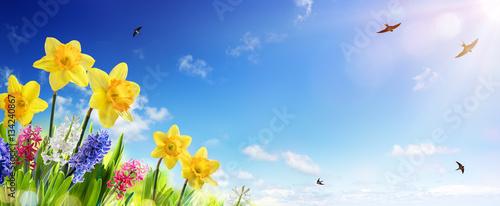 Transparent Wiosny I Wielkanocy - Żonkile W Świeżym Trawniku Z Muchą Jaskółki