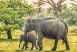 Sri Lanka: family of wild elephants in jungle of Yala National Park