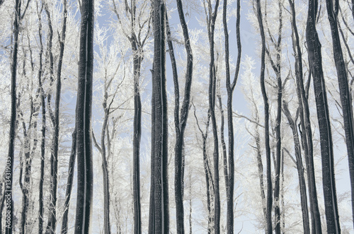 Tree trunks in forest landscape. Abstract composition background with minimal lines in winter