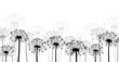 White background with dandelions. - 134320479