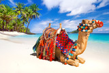 Camel ride on the tropical beach