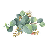 Watercolor vector bouquet with green eucalyptus leaves and branches. - 134329897