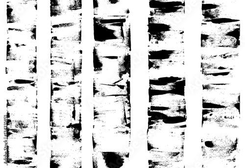 Birches. Background. - 134331451