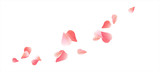 Pink Red flying petals isolated on white. Sakura Roses petals. Vector  - 134345245