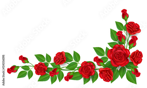 Realistic red rose illustration with green leaf, for corner and border decoration, isolated on white