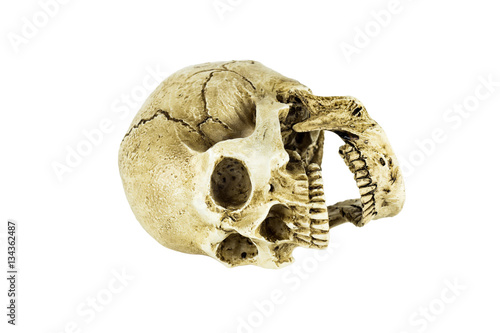 Poster Human skull isolated on white background, Clipping path
