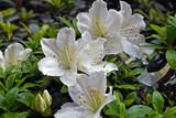 Primo piano con fiori bianchi e profumi di primavera