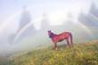 summer foggy rainbow