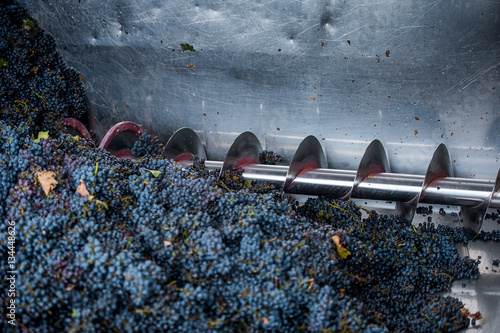 grape processing on the machine Poster