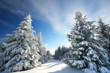 Winterurlaub, schneebedeckte Tannen im Gebirge