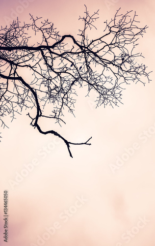Fototapeta Leafless bare tree over pink cloudy sky