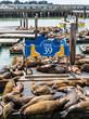 Pier 39 Seal Platforms