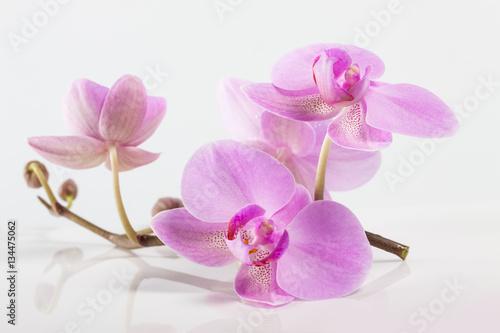 kwiaty-orchidei-spa-piekny-kwiatowy-tlo
