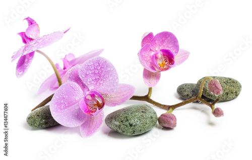 orchidea-i-kamienie-na-bialym-tle-piekne-rozowe-kwiaty-na-galezi