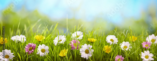 Spring flower in the meadow - 134486040